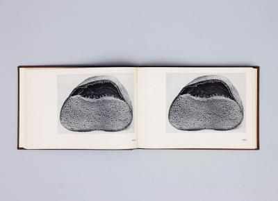 Michalis Pichler, BROTFEHLER (: Book object, 2013).