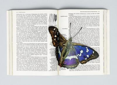 untitled (butterflies), collage in book (pop up/assisted readymade)