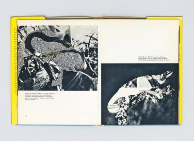Michalis Pichler, untitled (chamaeleons), collage in book