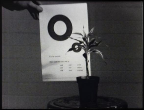 John Baldessari, Teaching a Plant, 1972