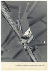 Untitled (locust #26), Michalis Pichler, 2010