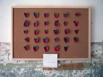 "5 Gramm ""Erdbeeren"", Michalis Pichler, 2012"